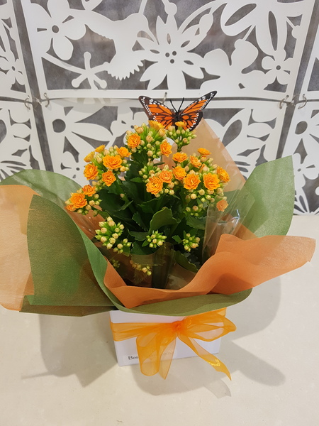 Testimonial Photo for Kalanchoe Plant with Butterfly