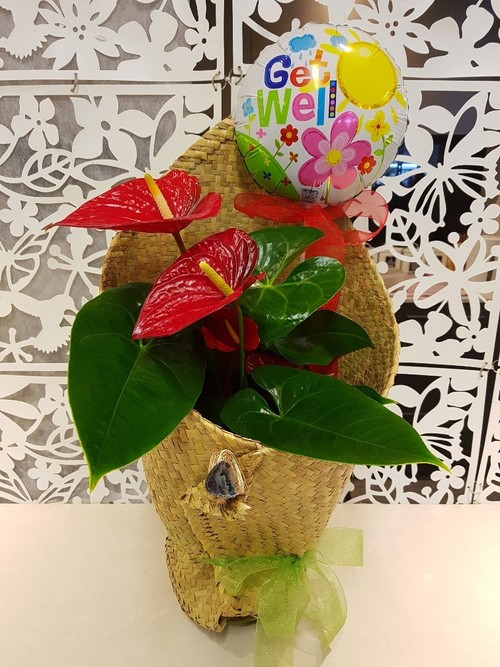 Testimonial for Tropical Plant in Kete Wrap