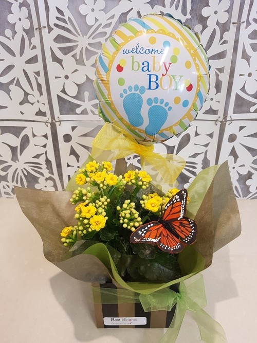 Testimonial for Kalanchoe Plant with Butterfly