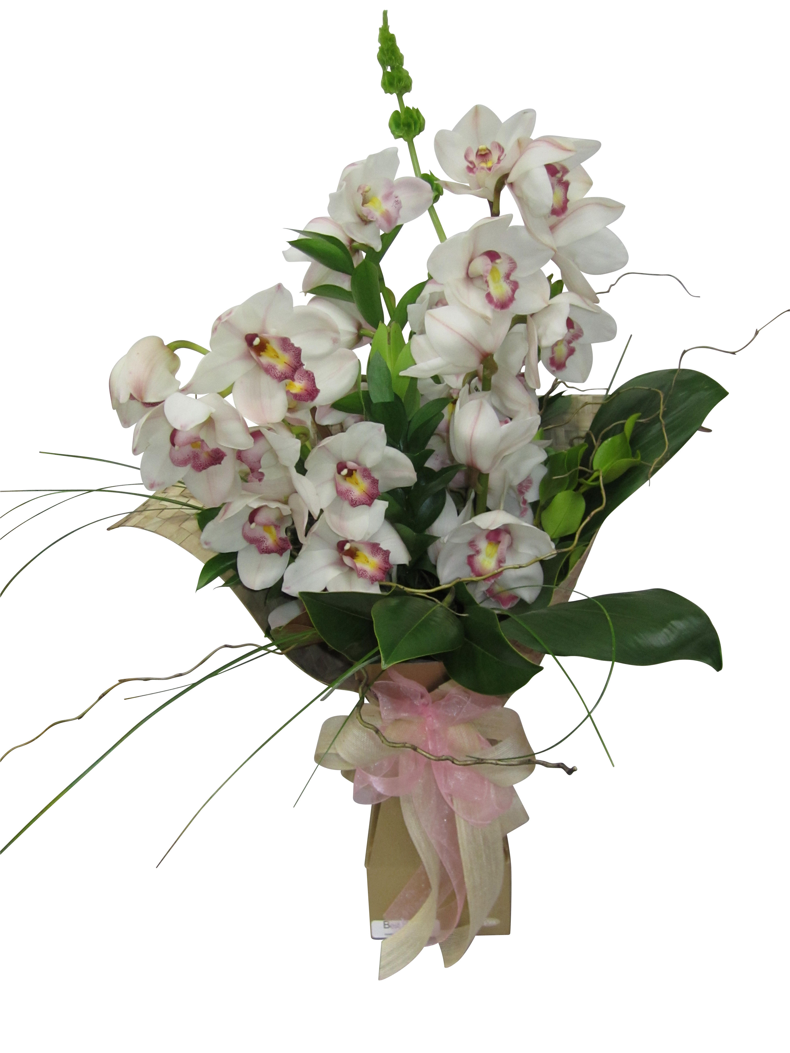 Orchids Delivery in Auckland