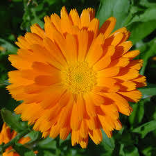 Calendula or marigold are the birth flower for october