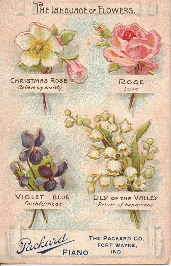 language of flowers image plate